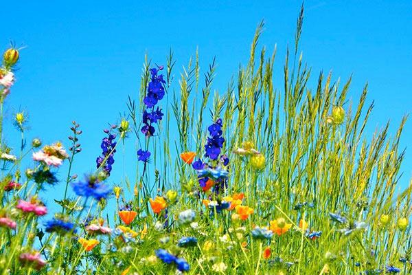 prairie fleurie camping pays basque